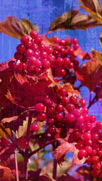 Wall Art - Photograph - Berry Season  by Garth Glazier