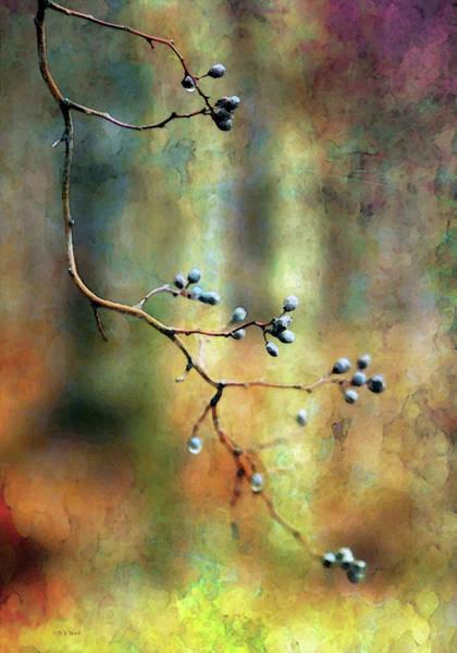 Photograph - Berry Shadows 7920 Idp_2 by Steven Ward