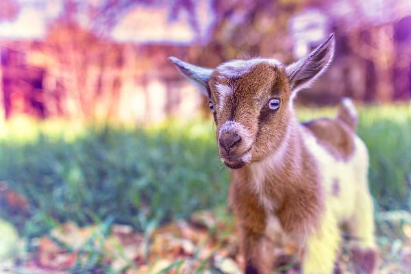 Cuteness Photograph - Bert by TC Morgan