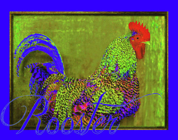 Bert The Rooster Art Print