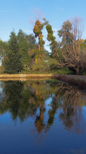 Photograph - Besides The Still Waters by Pamela Walton