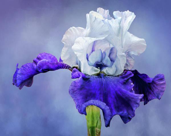 Wall Art - Photograph - Best Bet - Bearded Iris by Nikolyn McDonald