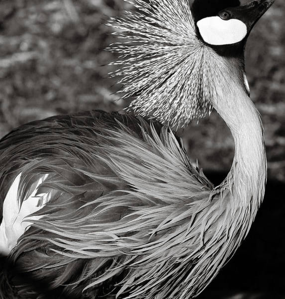 Photograph - Best Feathers Ever by Marilyn Hunt