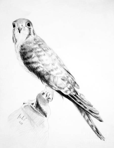 Drawing - Best Friend by Eleonora Perlic
