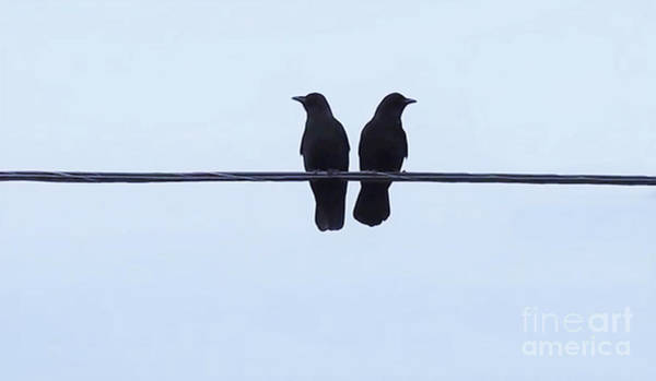 Black Crowes Wall Art - Photograph - Best Friends by Anthony Djordjevic