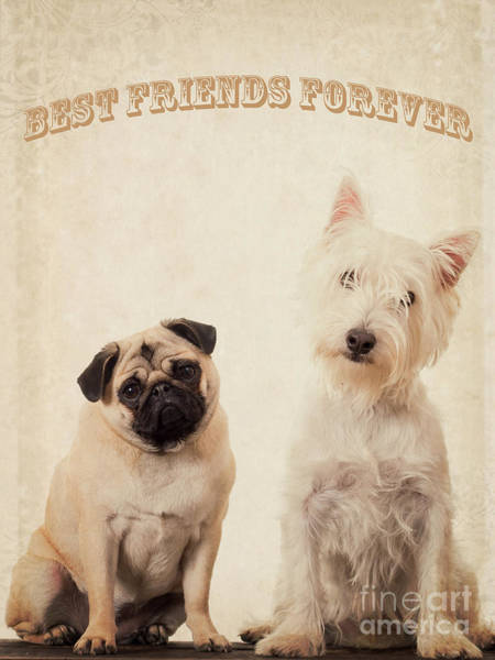 Westie Photograph - Best Friends Forever by Edward Fielding