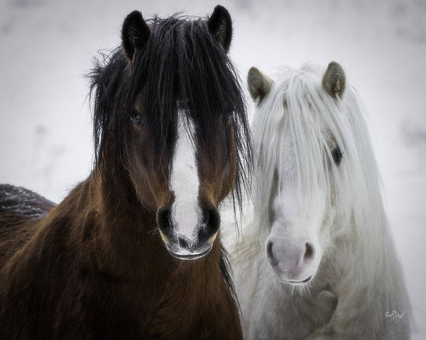 White Stallion Wall Art - Photograph - Best Friends II by Everet Regal