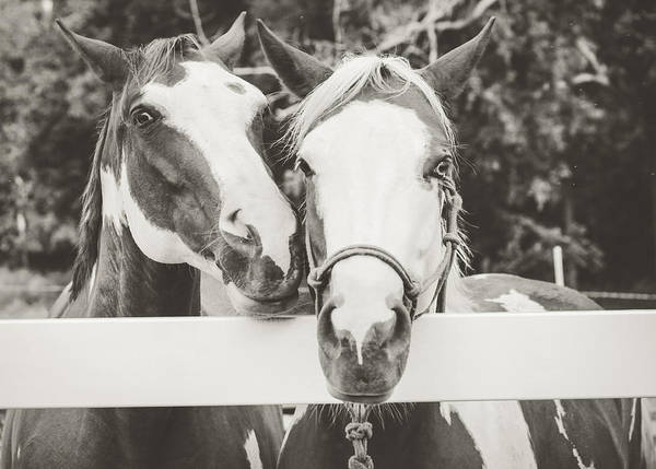 Photograph - Best Friends by Viviana  Nadowski