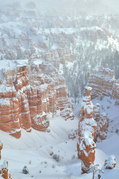 Photograph - Best Of Bryce by Ray Mathis