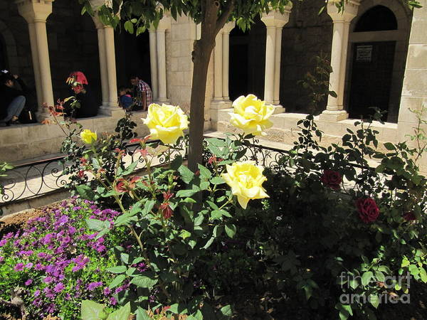 Photograph - Bethlehem  Rose Garden by Donna L Munro