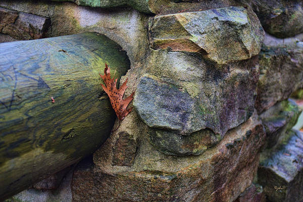 Photograph - Between A Rock And... by Paulette B Wright
