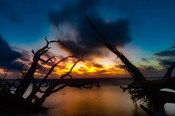 Photograph - Between Driftwood Twilight by Chris Bordeleau