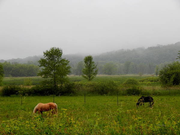 Photograph - Between Horses And Mist by Wild Thing