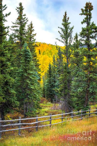 Photograph - Between Pines by Susan Warren