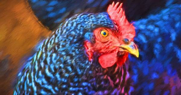 Photograph - Beverlys Chicken by Alice Gipson