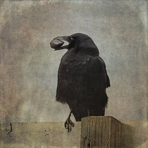 Art Print featuring the photograph Beware Of Crows by Sally Banfill