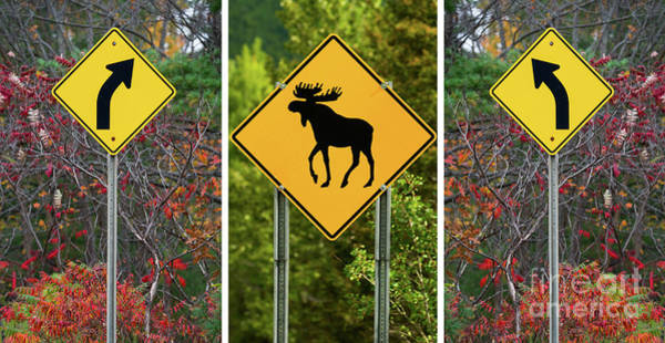 Photograph - Beware Of The Moose Triptych  by Les Palenik