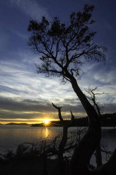 Teddy Photograph - Beyond The Bay by Ryan McGinnis