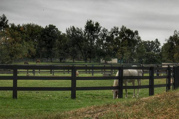 1004 - Beyond The Fence White Horse Art Print