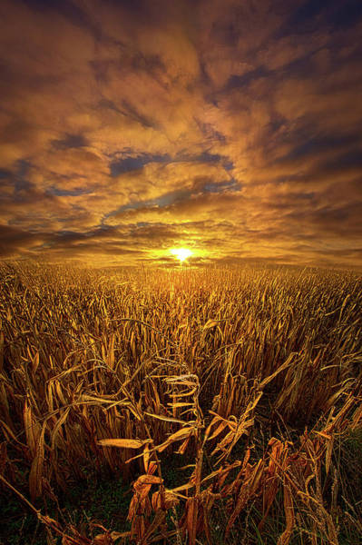 Wall Art - Photograph - Beyond The Harvest by Phil Koch