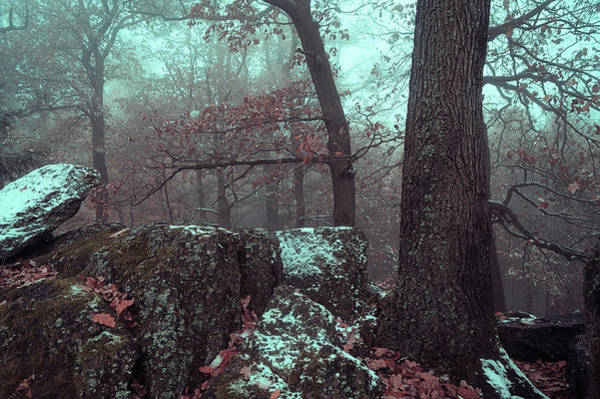 Photograph - Beyond The Trees And Rocks by Jenny Rainbow