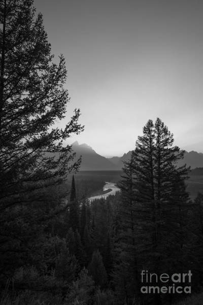 Moose Art Photograph - Beyond The Trees Bw by Michael Ver Sprill