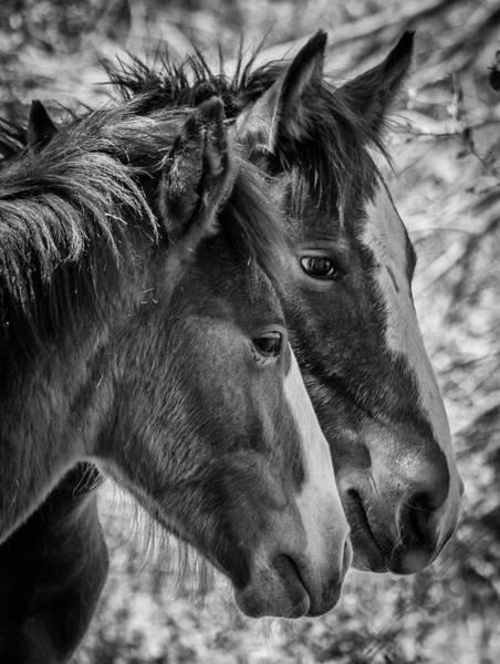 Photograph - Bffs by Teresa Wilson