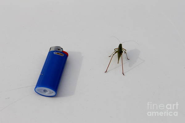 Photograph - Bic And Bug by Marie Neder