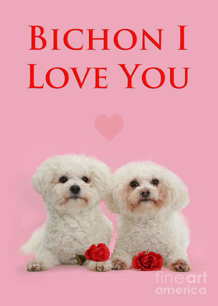 Photograph - Bichon I Love You by Warren Photographic