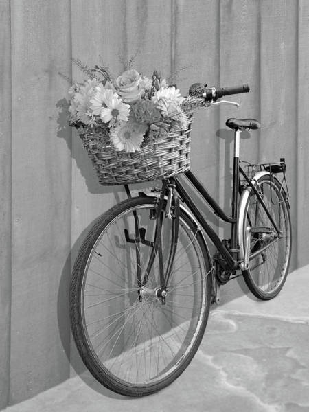 Photograph - Bicycle Flower Basket Mono by Gill Billington
