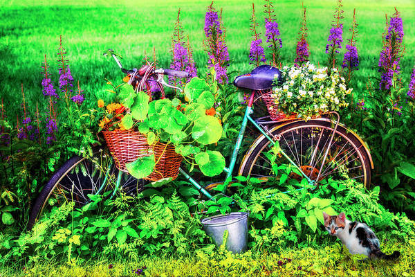 Photograph - Bicycle In The Flower Garden by Debra and Dave Vanderlaan