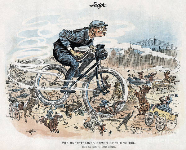 Photograph - Bicycling Cartoon by Granger