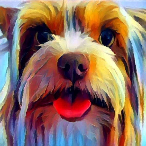 Wall Art - Painting - Biewer Terrier by Chris Butler
