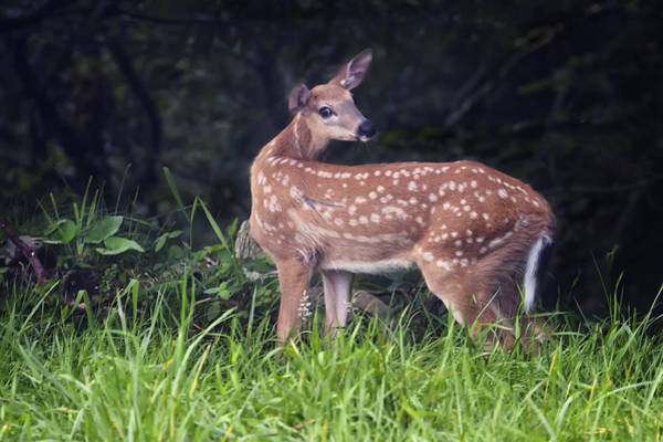 Big Bambi Art Print