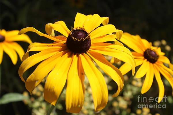 Photograph - Big Bear Blooms by Jenny Revitz Soper