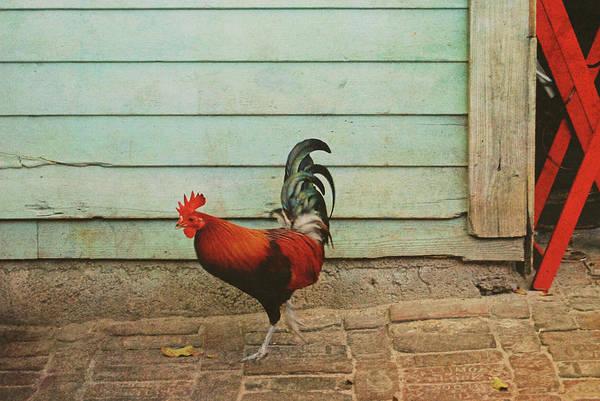 Photograph - Big Bird Strut by JAMART Photography