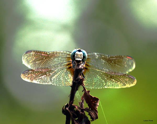 Photograph - Big Blue Dragonfly Art by Lesa Fine