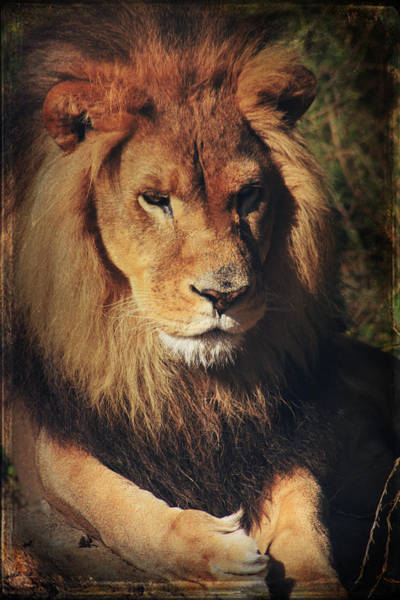 Photograph - Big Boy by Laurie Search