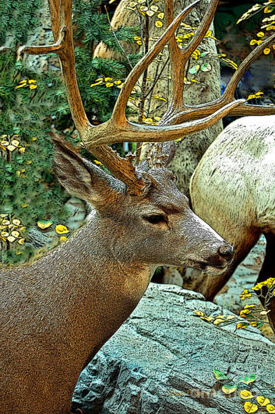 Whitetail Drawing - Big Buck by Diane E Berry