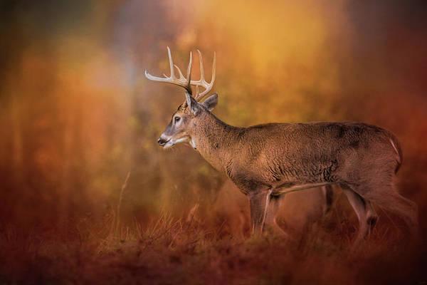Photograph - Big Buck In Autumn White Tailed Deer Art by Jai Johnson