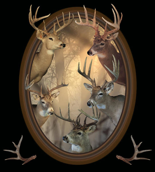 Photograph - Big Bucks by Shane Bechler