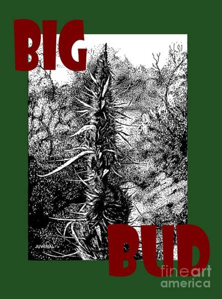 Weeds Drawing - Big Bud by Joseph Juvenal