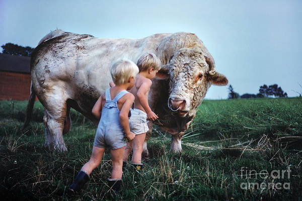 Photograph - Big Friendly Bull And The Kids by Kim Lessel