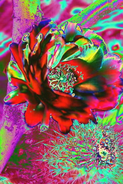 Photograph - Big Cactus Flower by Richard Henne