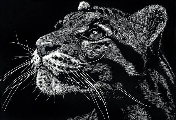 Drawing - Big Cat by William Underwood