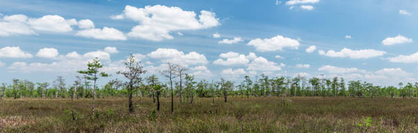 Everglades Photograph - Big Cypress Marshes by Jon Glaser