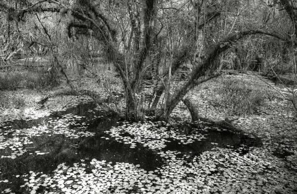 Photograph - Big Cypress by Michael Kirk