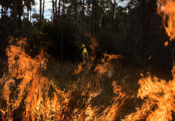 Photograph - Big Cypress Prescribed Burn by Robert Potts