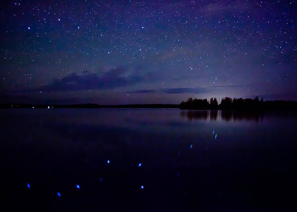 Photograph - Big Dipper Reflection by Adam Pender