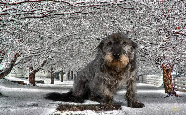 Photograph - Big Dog In Snow by Sam Davis Johnson